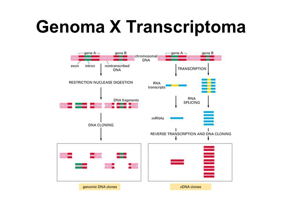 Genoma X Transcriptoma