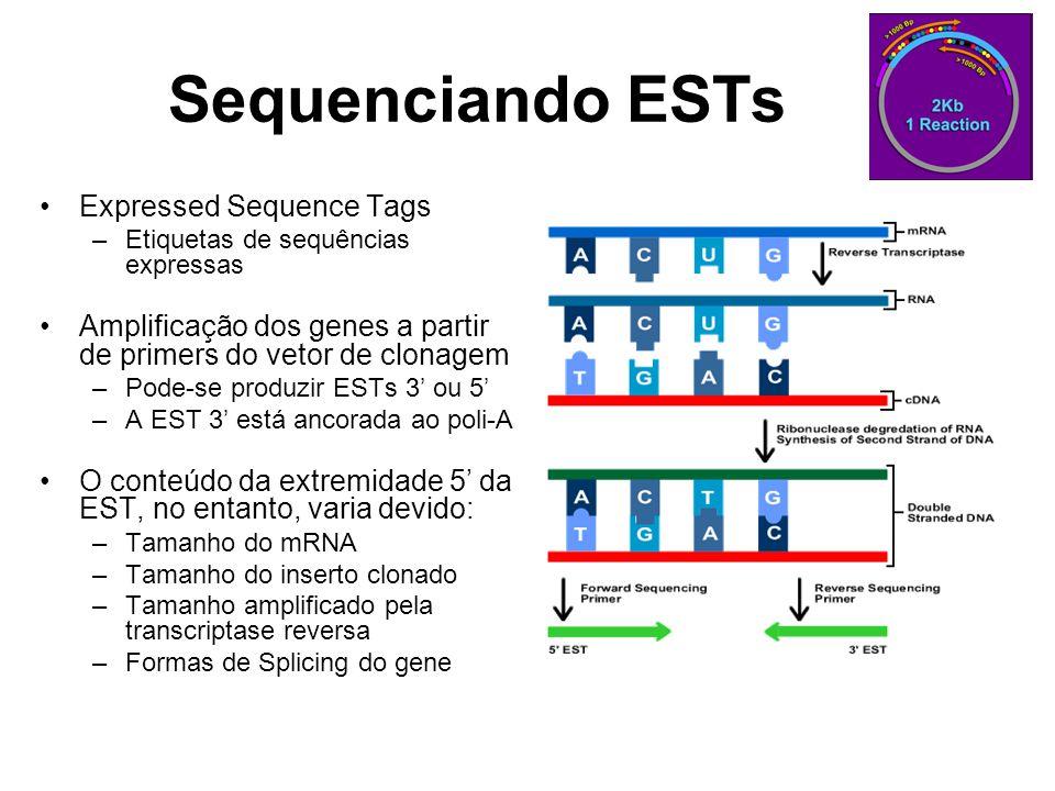 Sequenciando ESTs Expressed Sequence Tags –Etiquetas de sequências expressas Amplificação dos genes a partir de primers do vetor de clonagem –Pode-se