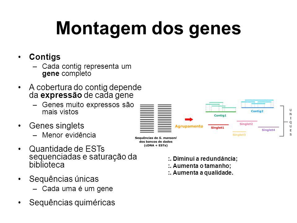Montagem dos genes Contigs –Cada contig representa um gene completo A cobertura do contig depende da expressão de cada gene –Genes muito expressos são