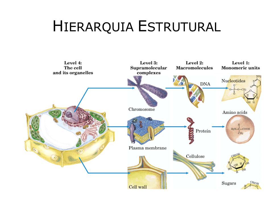 H IERARQUIA E STRUTURAL