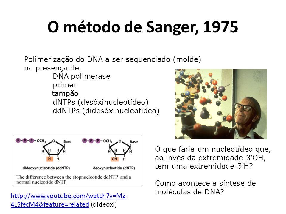 O método de Sanger, 1975 Polimerização do DNA a ser sequenciado (molde) na presença de: DNA polimerase primer tampão dNTPs (desóxinucleotídeo) ddNTPs (didesóxinucleotídeo) O que faria um nucleotídeo que, ao invés da extremidade 3OH, tem uma extremidade 3H.
