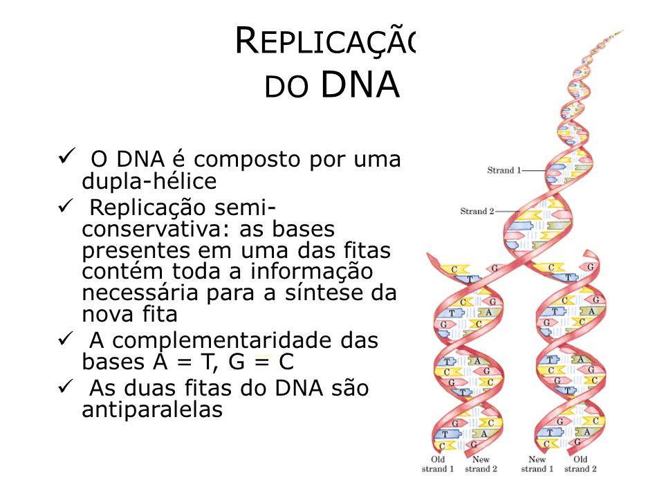 Biblioteca transcriptômica Ou biblioteca de cDNA, DNA complementar Purificação dos mRNAs –Oligos dT Retrotranscrição Clonagem