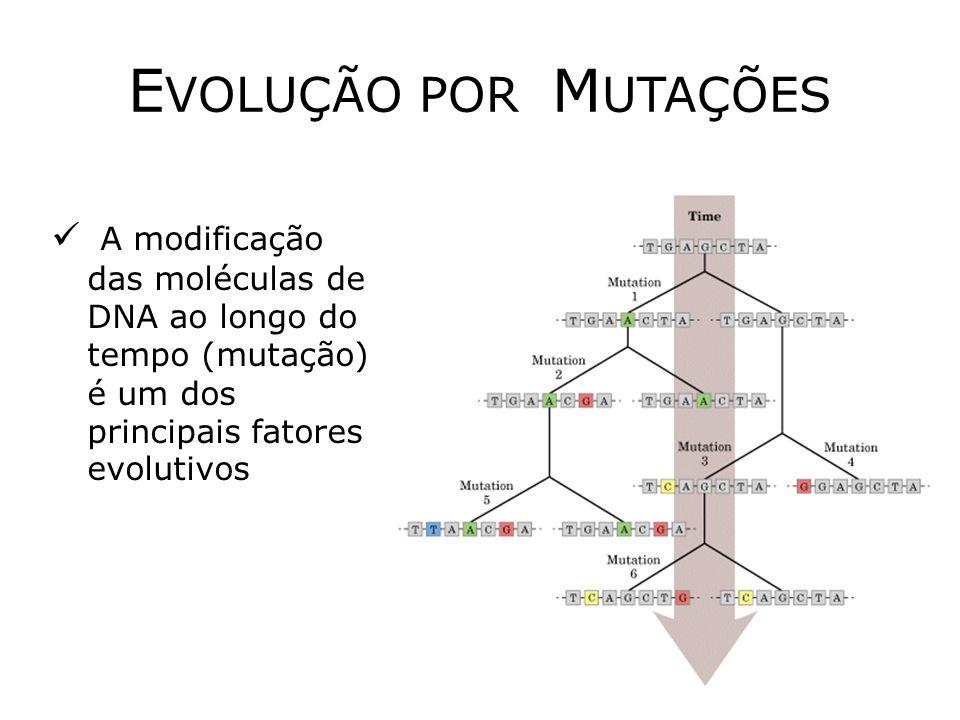 E VOLUÇÃO POR M UTAÇÕES A modificação das moléculas de DNA ao longo do tempo (mutação) é um dos principais fatores evolutivos