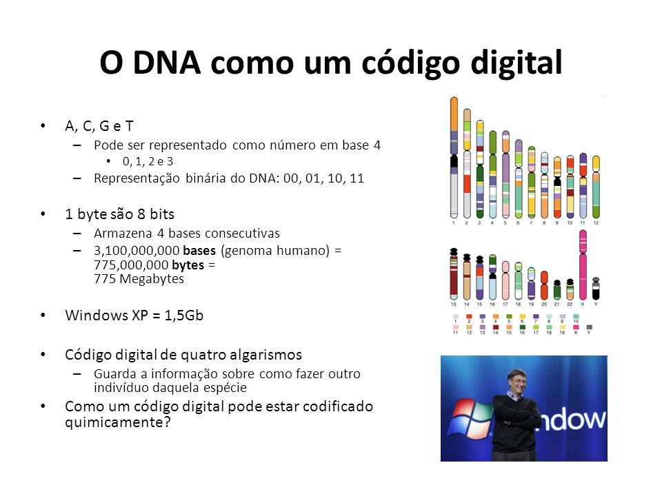 O DNA como um código digital A, C, G e T – Pode ser representado como número em base 4 0, 1, 2 e 3 – Representação binária do DNA: 00, 01, 10, 11 1 byte são 8 bits – Armazena 4 bases consecutivas – 3,100,000,000 bases (genoma humano) = 775,000,000 bytes = 775 Megabytes Windows XP = 1,5Gb Código digital de quatro algarismos – Guarda a informação sobre como fazer outro indivíduo daquela espécie Como um código digital pode estar codificado quimicamente?