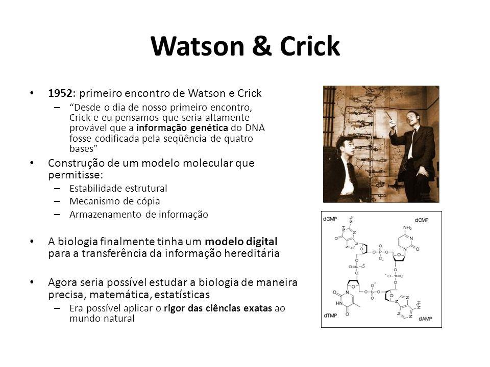 Watson & Crick 1952: primeiro encontro de Watson e Crick – Desde o dia de nosso primeiro encontro, Crick e eu pensamos que seria altamente provável que a informação genética do DNA fosse codificada pela seqüência de quatro bases Construção de um modelo molecular que permitisse: – Estabilidade estrutural – Mecanismo de cópia – Armazenamento de informação A biologia finalmente tinha um modelo digital para a transferência da informação hereditária Agora seria possível estudar a biologia de maneira precisa, matemática, estatísticas – Era possível aplicar o rigor das ciências exatas ao mundo natural
