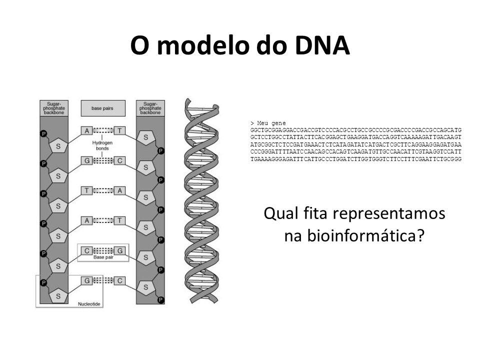 O modelo do DNA > Meu gene GGCTGCGGAGGACCGACCGTCCCCACGCCTGCCGCCCCGCGACCCCGACCGCCAGCATG GCTCCTGGCCTATTACTTCACGGAGCTGAAGGATGACCAGGTCAAAAAGATTGACAAGT ATGCGGCTCTCCGATGAAACTCTCATAGATATCATGACTCGCTTCAGGAAGGAGATGAA CCCGGGATTTTAATCCAACAGCCACAGTCAAGATGTTGCCAACATTCGTAAGGTCCATT TGAAAAGGGAGATTTCATTGCCCTGGATCTTGGTGGGTCTTCCTTTCGAATTCTGCGGG Qual fita representamos na bioinformática?
