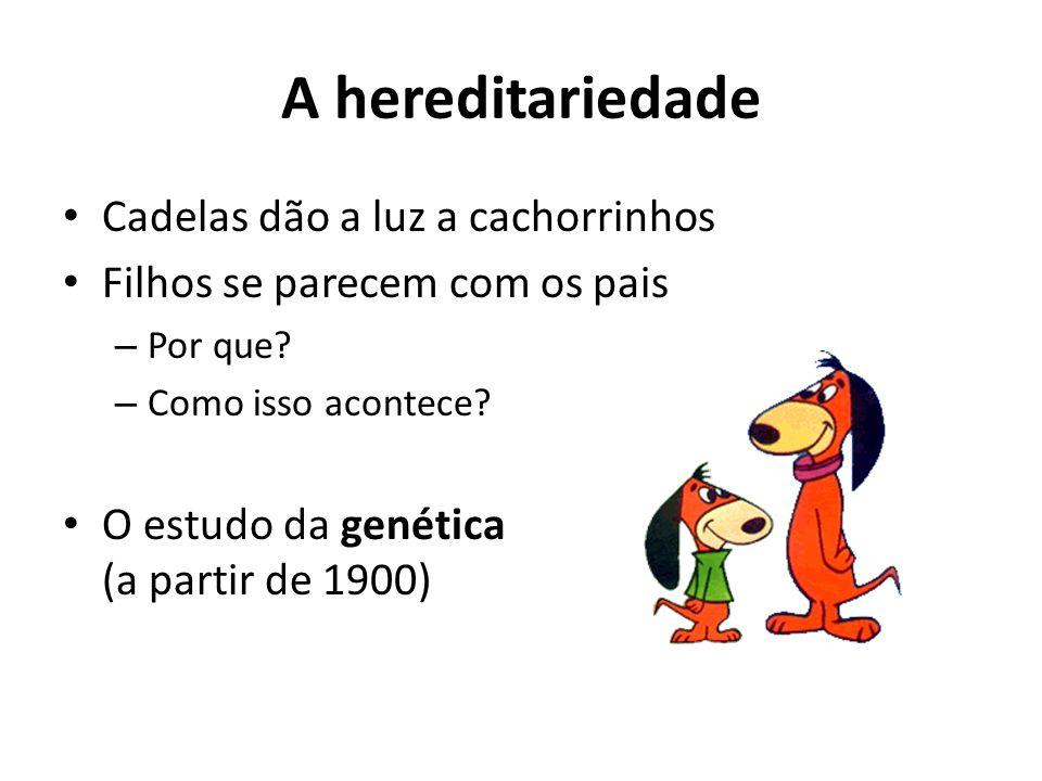 A hereditariedade Cadelas dão a luz a cachorrinhos Filhos se parecem com os pais – Por que? – Como isso acontece? O estudo da genética (a partir de 19