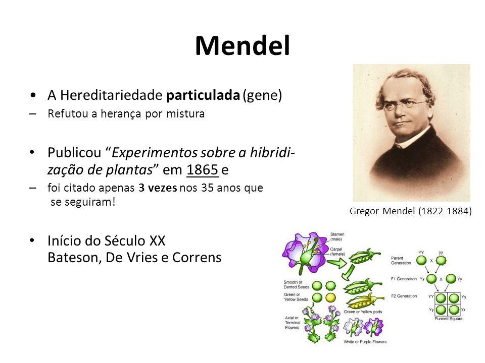 Mendel A Hereditariedade particulada (gene) – Refutou a herança por mistura Publicou Experimentos sobre a hibridi- zação de plantas em 1865 e – foi ci