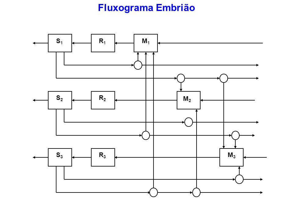 S1S1 R1R1 S2S2 R2R2 S3S3 R3R3 M3M3 M1M1 M2M2 Fluxograma Embrião