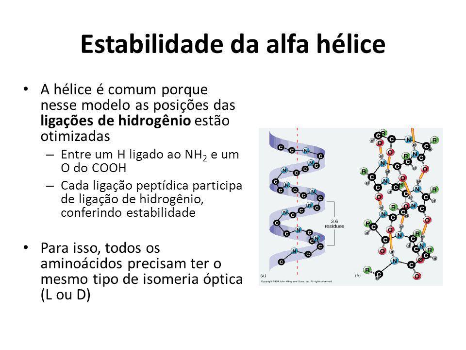 Estabilidade da alfa hélice A hélice é comum porque nesse modelo as posições das ligações de hidrogênio estão otimizadas – Entre um H ligado ao NH 2 e