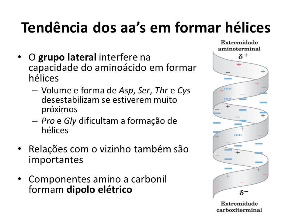 Tendência dos aas em formar hélices O grupo lateral interfere na capacidade do aminoácido em formar hélices – Volume e forma de Asp, Ser, Thr e Cys de