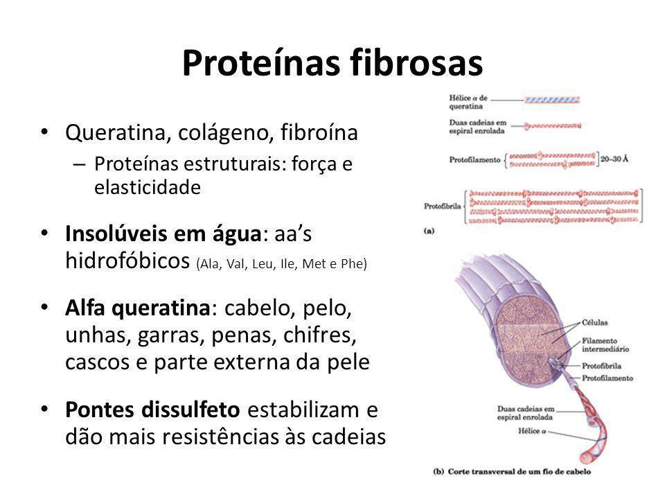 Proteínas fibrosas Queratina, colágeno, fibroína – Proteínas estruturais: força e elasticidade Insolúveis em água: aas hidrofóbicos (Ala, Val, Leu, Il