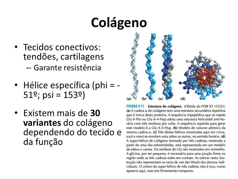 Colágeno Tecidos conectivos: tendões, cartilagens – Garante resistência Hélice específica (phi = - 51º; psi = 153º) Existem mais de 30 variantes do co