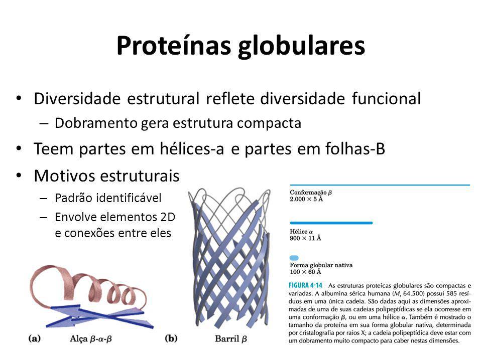 Proteínas globulares Diversidade estrutural reflete diversidade funcional – Dobramento gera estrutura compacta Teem partes em hélices-a e partes em fo