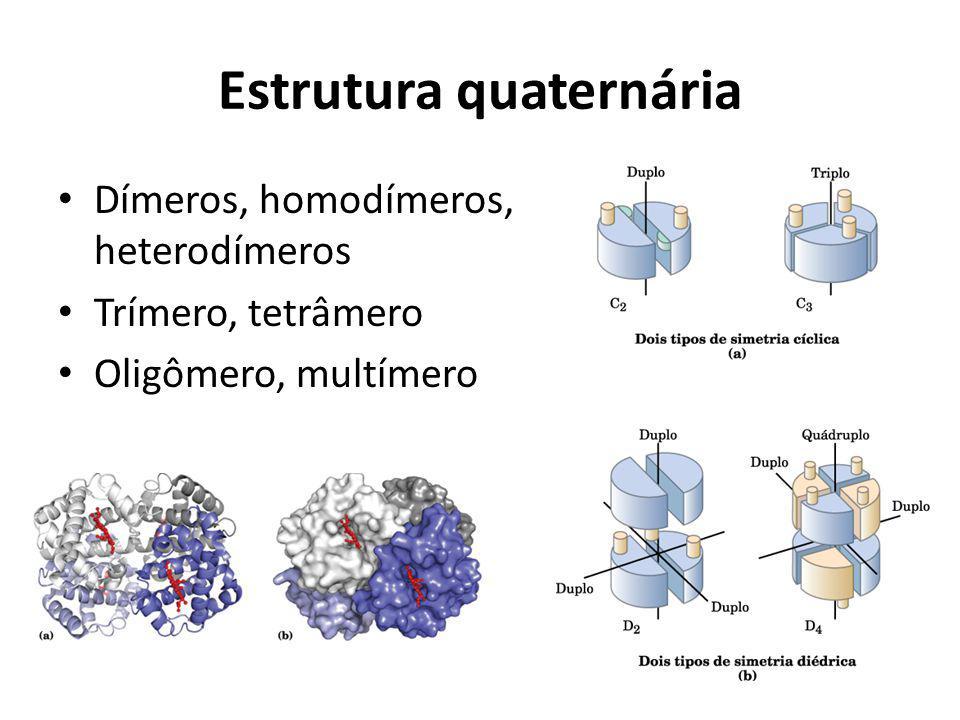 Estrutura quaternária Dímeros, homodímeros, heterodímeros Trímero, tetrâmero Oligômero, multímero