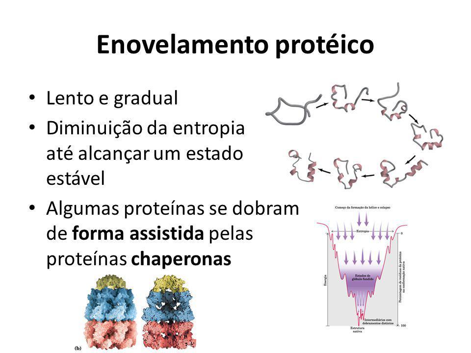 Enovelamento protéico Lento e gradual Diminuição da entropia até alcançar um estado estável Algumas proteínas se dobram de forma assistida pelas prote