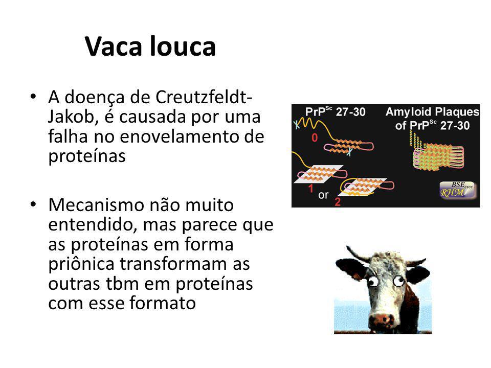 Vaca louca A doença de Creutzfeldt- Jakob, é causada por uma falha no enovelamento de proteínas Mecanismo não muito entendido, mas parece que as prote