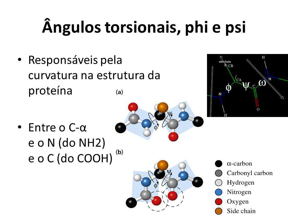Ângulos torsionais, phi e psi Responsáveis pela curvatura na estrutura da proteína Entre o C-α e o N (do NH2) e o C (do COOH)