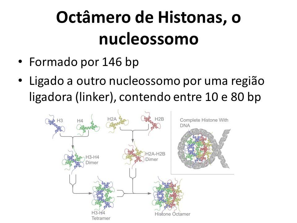 Octâmero de Histonas, o nucleossomo Formado por 146 bp Ligado a outro nucleossomo por uma região ligadora (linker), contendo entre 10 e 80 bp