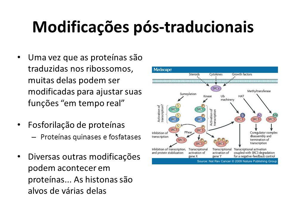 Modificações pós-traducionais Uma vez que as proteínas são traduzidas nos ribossomos, muitas delas podem ser modificadas para ajustar suas funções em
