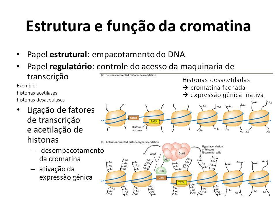 Estrutura e função da cromatina Papel estrutural: empacotamento do DNA Papel regulatório: controle do acesso da maquinaria de transcrição Exemplo: his