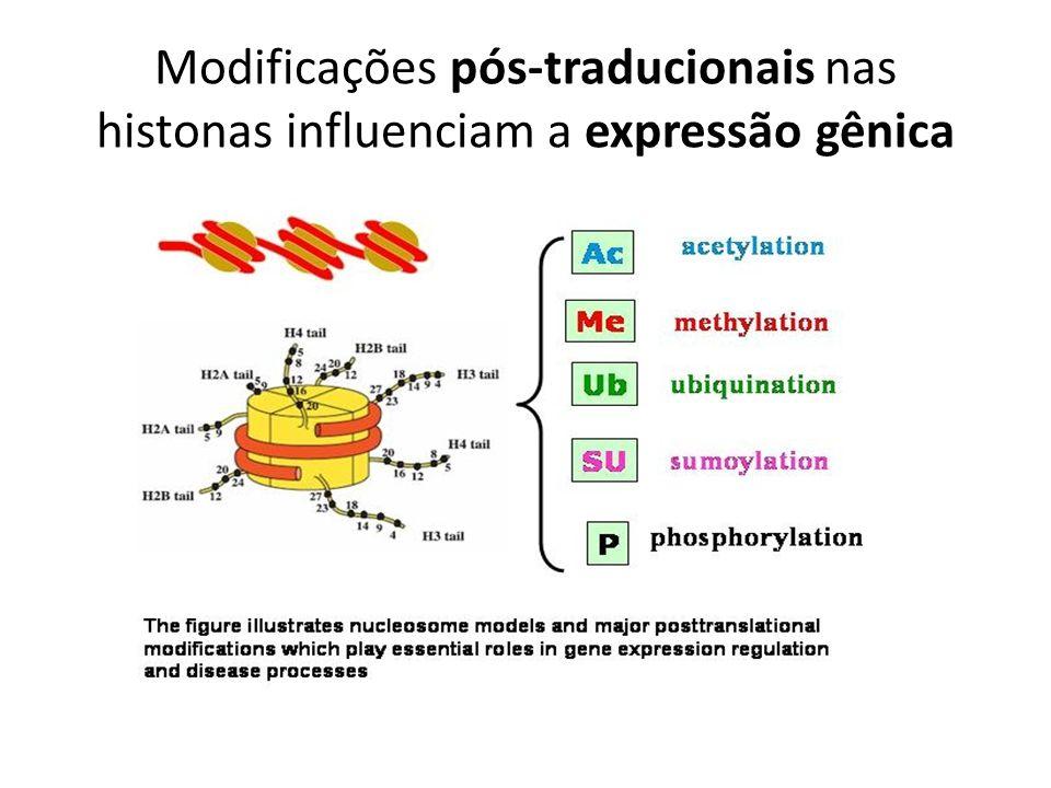 Modificações pós-traducionais nas histonas influenciam a expressão gênica