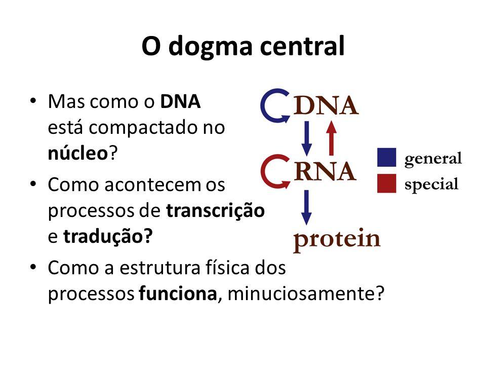 O dogma central Mas como o DNA está compactado no núcleo? Como acontecem os processos de transcrição e tradução? Como a estrutura física dos processos