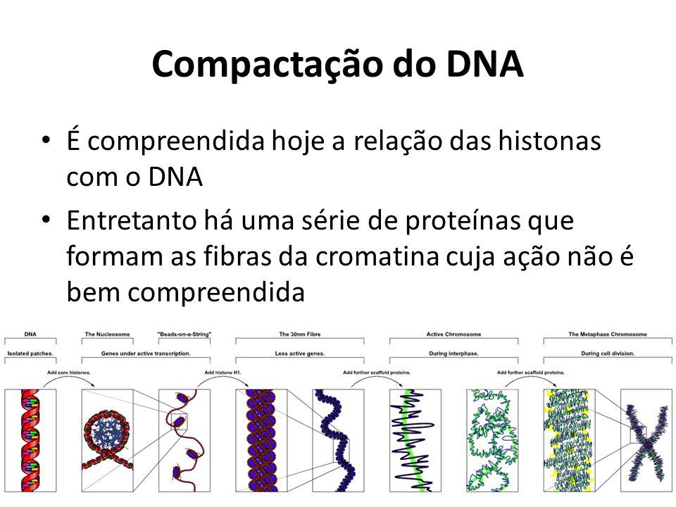 Compactação do DNA É compreendida hoje a relação das histonas com o DNA Entretanto há uma série de proteínas que formam as fibras da cromatina cuja aç