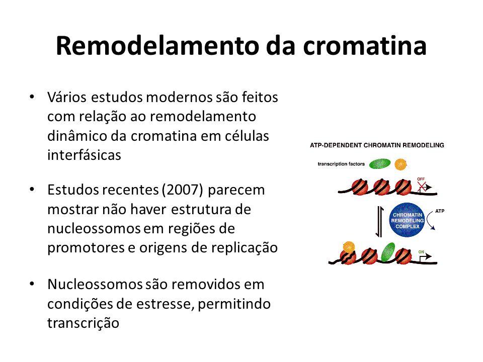 Remodelamento da cromatina Vários estudos modernos são feitos com relação ao remodelamento dinâmico da cromatina em células interfásicas Estudos recen