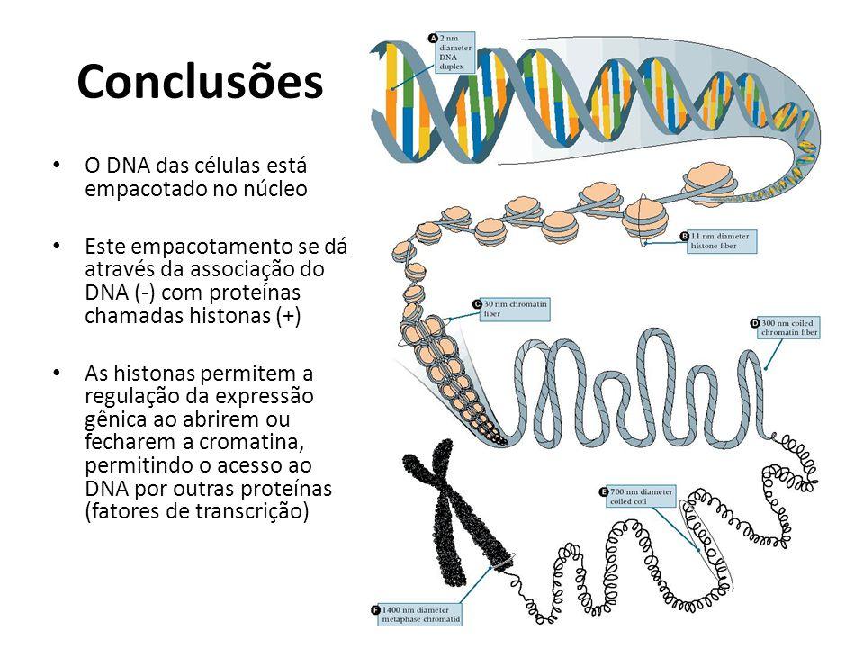 Conclusões O DNA das células está empacotado no núcleo Este empacotamento se dá através da associação do DNA (-) com proteínas chamadas histonas (+) A