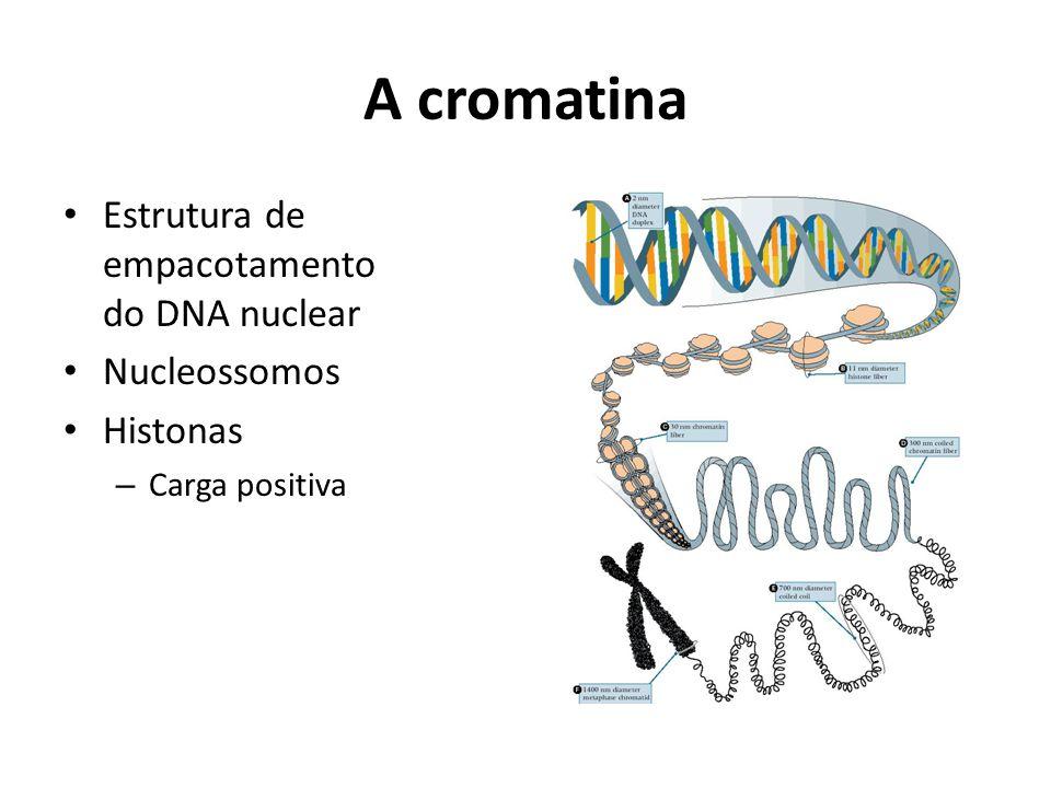 A cromatina Estrutura de empacotamento do DNA nuclear Nucleossomos Histonas – Carga positiva