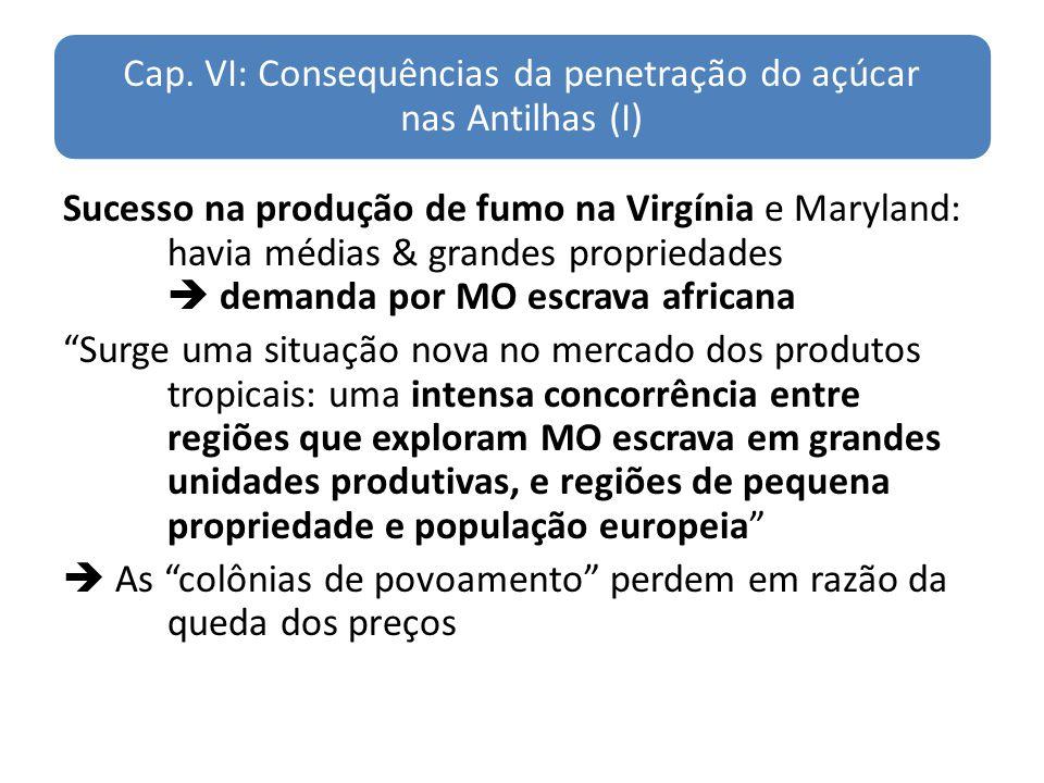 Cap. VI: Consequências da penetração do açúcar nas Antilhas (I) Sucesso na produção de fumo na Virgínia e Maryland: havia médias & grandes propriedade