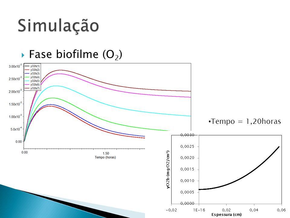 Fase biofilme (O 2 ) Tempo = 1,20horas