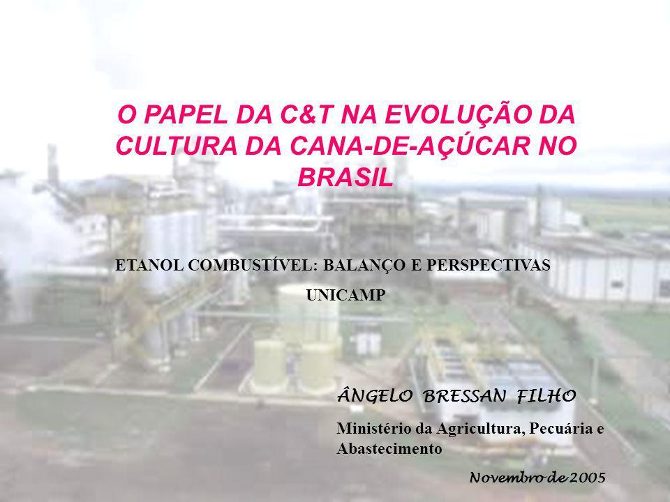 ÂNGELO BRESSAN FILHO Novembro de 2005 ETANOL COMBUSTÍVEL: BALANÇO E PERSPECTIVAS UNICAMP O PAPEL DA C&T NA EVOLUÇÃO DA CULTURA DA CANA-DE-AÇÚCAR NO BR