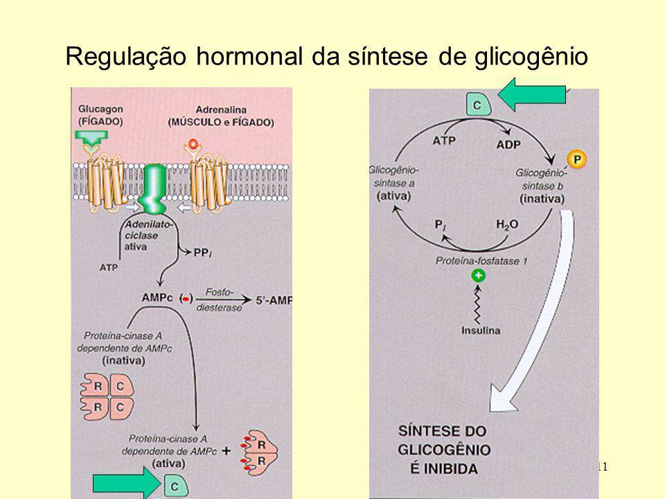 11 Regulação hormonal da síntese de glicogênio