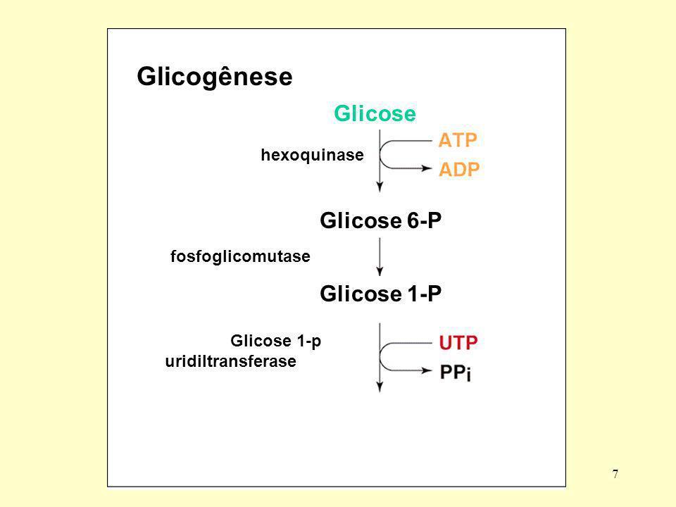 8 Glicogênio sintase (Glicose)n (Glicose)n+1 glicose Glucagon (fígado) Adrenalina (fígado e músculo)