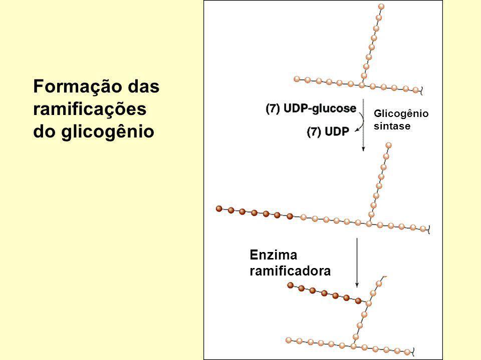 9 Formação das ramificações do glicogênio Glicogênio sintase Enzima ramificadora