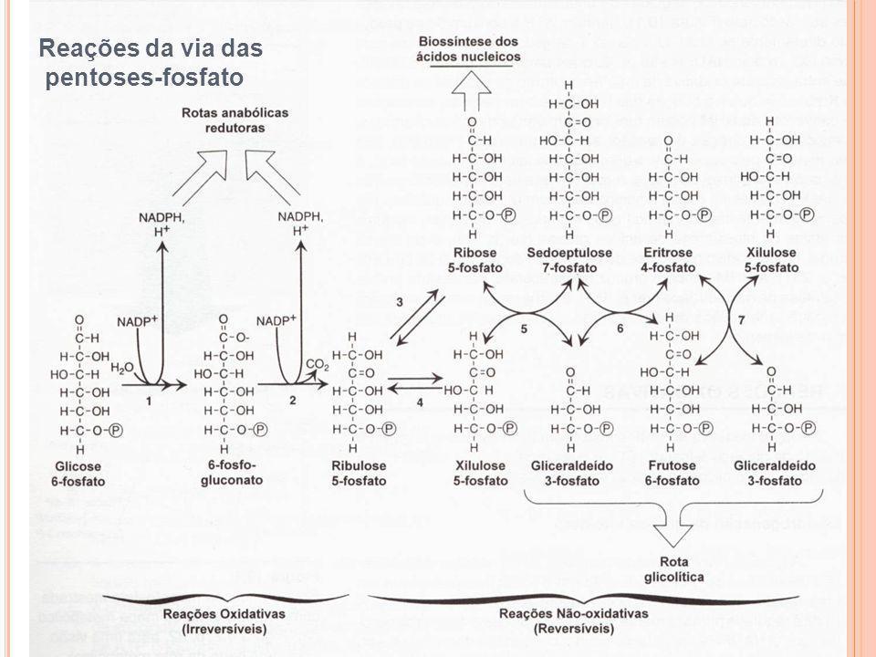 1 Reações da via das pentoses-fosfato