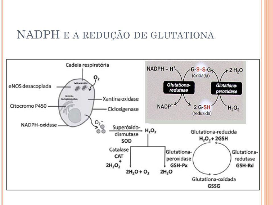 NADPH E A REDUÇÃO DE GLUTATIONA 5