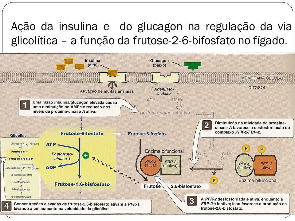 Ação da insulina e do glucagon na regulação da via glicolítica – a função da frutose-2-6-bifosfato no fígado. 10