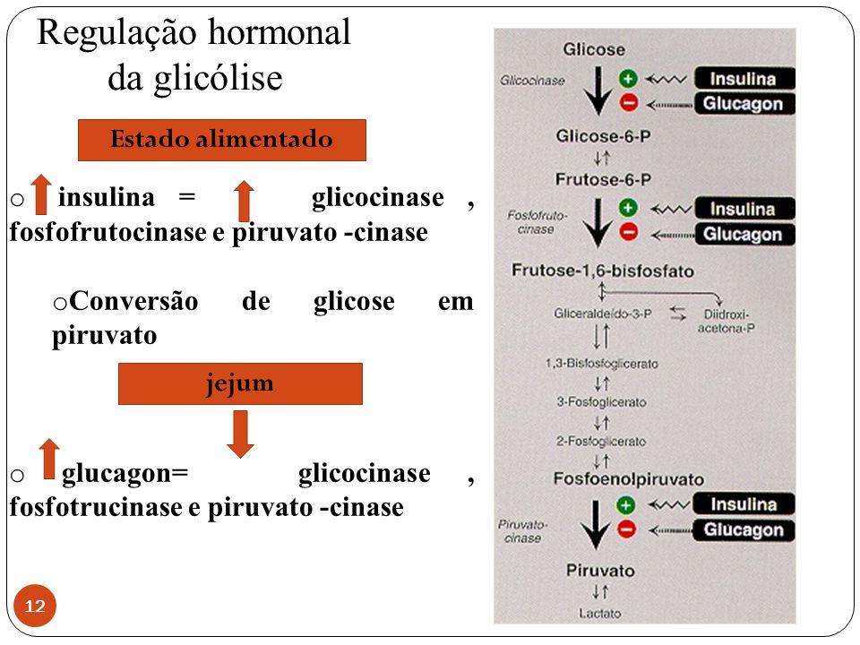 Regulação hormonal da glicólise 12 o insulina = glicocinase, fosfofrutocinase e piruvato -cinase o Conversão de glicose em piruvato o glucagon= glicoc