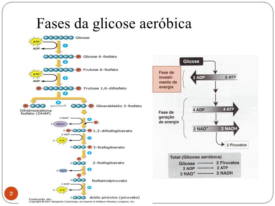 Fases da glicose aeróbica 2