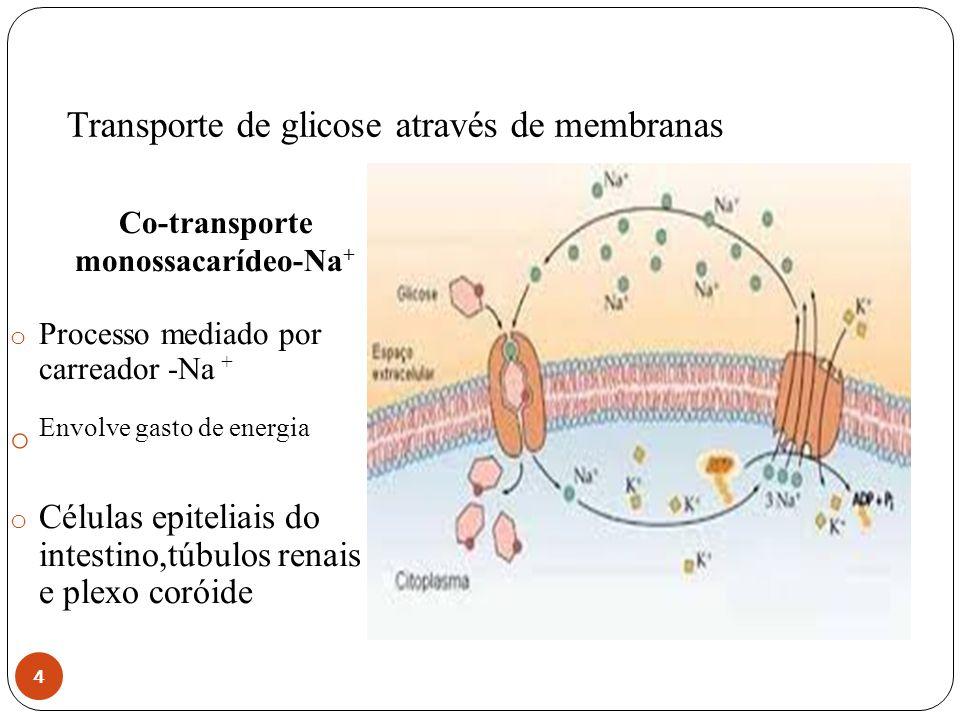 Transporte de glicose através de membranas 4 Co-transporte monossacarídeo-Na + o Processo mediado por carreador -Na + o Envolve gasto de energia o Cél