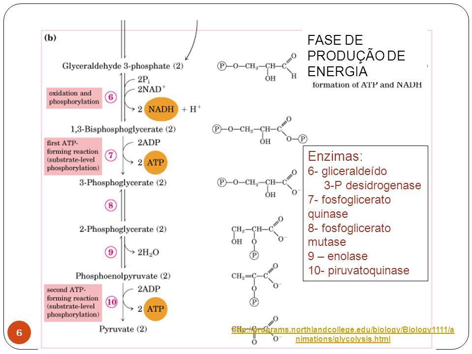 6 Enzimas: 6- gliceraldeído 3-P desidrogenase 7- fosfoglicerato quinase 8- fosfoglicerato mutase 9 – enolase 10- piruvatoquinase FASE DE PRODUÇÃO DE E