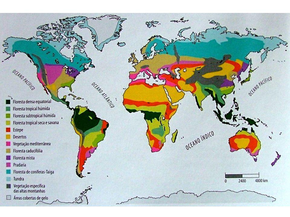 Formação Vegetal: Equador Pólos 90º 75º 50º 25º 0º Tundra Floresta de Coníferas ou Taïga Pradaria e Estepe temperada Floresta Caducifólia Floresta Mediterrânea (Garrigue + Maquis) Floresta mista subtropical húmida Estepe Tropical e Deserto Savana e Floresta Galeria Floresta Tropical Seca Floresta Tropical Húmida Floresta Densa Equatorial Polar Subpolar Continental Marítimo ou Oceânico Subtropical Seco (Mediterrâneo) Subtropical Húmido Desértico Quente Tropical Seco Tropical Húmido Equatorial Distribuição latitudinal das formações vegetais ClimasFormações Vegetais Floresta Tropical
