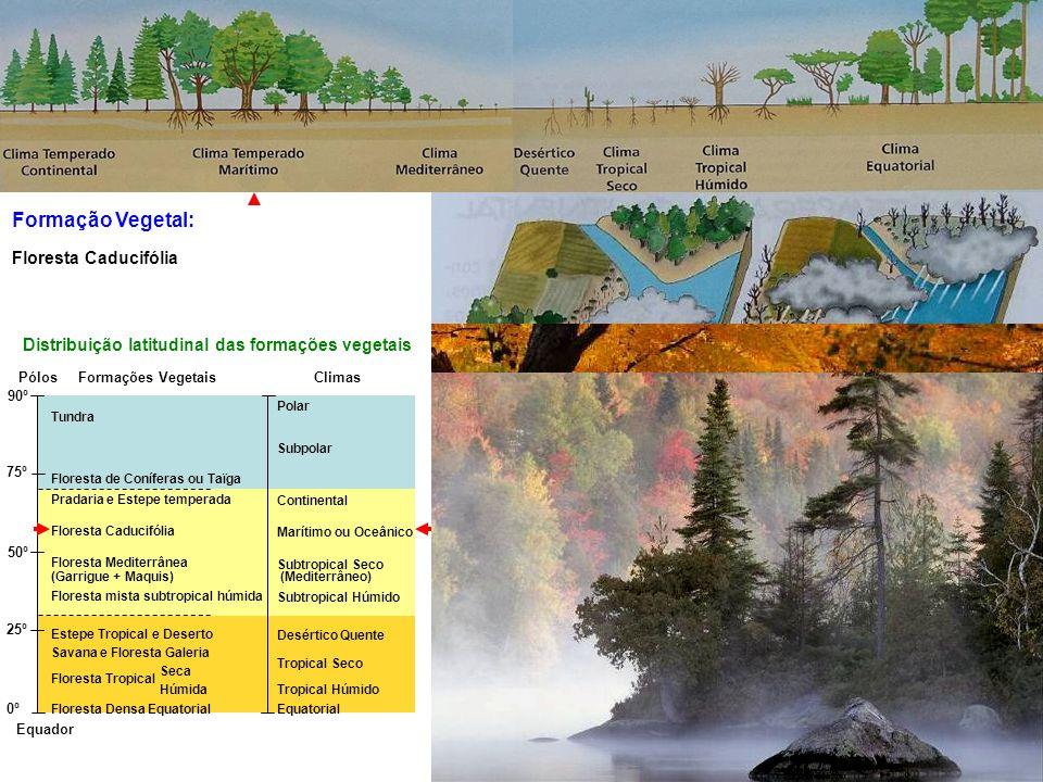 Formação Vegetal: Equador Pólos 90º 75º 50º 25º 0º Tundra Floresta de Coníferas ou Taïga Pradaria e Estepe temperada Floresta Caducifólia Floresta Mediterrânea (Garrigue + Maquis) Floresta mista subtropical húmida Estepe Tropical e Deserto Savana e Floresta Galeria Floresta Tropical Seca Floresta Tropical Húmida Floresta Densa Equatorial Polar Subpolar Continental Marítimo ou Oceânico Subtropical Seco (Mediterrâneo) Subtropical Húmido Desértico Quente Tropical Seco Tropical Húmido Equatorial Distribuição latitudinal das formações vegetais ClimasFormações Vegetais Floresta Tropical Floresta Caducifólia