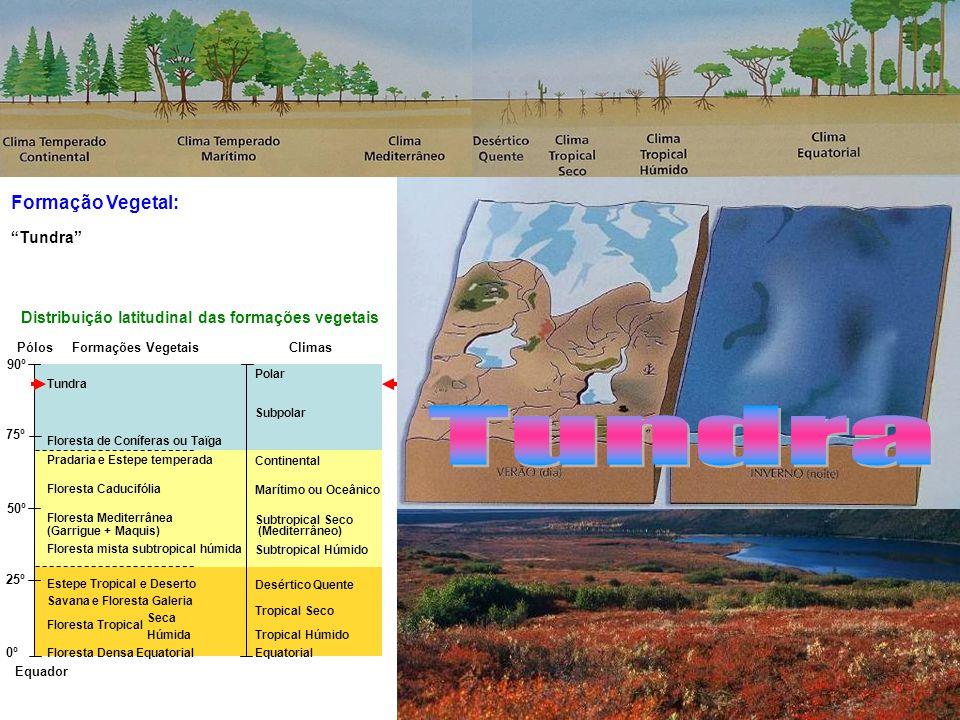Formação Vegetal: Equador Pólos 90º 75º 50º 25º 0º Tundra Floresta de Coníferas ou Taïga Pradaria e Estepe temperada Floresta Caducifólia Floresta Mediterrânea (Garrigue + Maquis) Floresta mista subtropical húmida Estepe Tropical e Deserto Savana e Floresta Galeria Floresta Tropical Seca Floresta Tropical Húmida Floresta Densa Equatorial Polar Subpolar Continental Marítimo ou Oceânico Subtropical Seco (Mediterrâneo) Subtropical Húmido Desértico Quente Tropical Seco Tropical Húmido Equatorial Distribuição latitudinal das formações vegetais ClimasFormações Vegetais Floresta Tropical Tundra