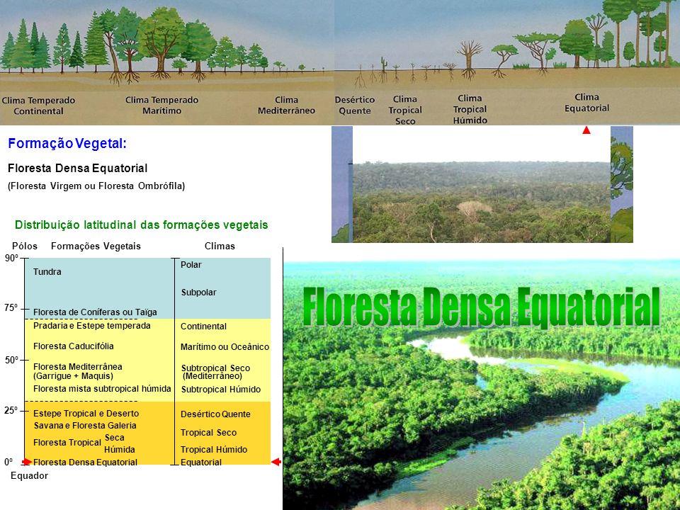Formação Vegetal: Equador Pólos 90º 75º 50º 25º 0º Tundra Floresta de Coníferas ou Taïga Pradaria e Estepe temperada Floresta Caducifólia Floresta Mediterrânea (Garrigue + Maquis) Floresta mista subtropical húmida Estepe Tropical e Deserto Savana e Floresta Galeria Floresta Tropical Seca Floresta Tropical Húmida Floresta Densa Equatorial Polar Subpolar Continental Marítimo ou Oceânico Subtropical Seco (Mediterrâneo) Subtropical Húmido Desértico Quente Tropical Seco Tropical Húmido Equatorial Distribuição latitudinal das formações vegetais ClimasFormações Vegetais Floresta Tropical Floresta Densa Equatorial (Floresta Virgem ou Floresta Ombrófila)