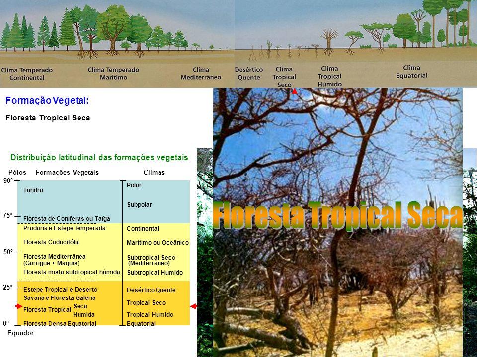 Formação Vegetal: Equador Pólos 90º 75º 50º 25º 0º Tundra Floresta de Coníferas ou Taïga Pradaria e Estepe temperada Floresta Caducifólia Floresta Mediterrânea (Garrigue + Maquis) Floresta mista subtropical húmida Estepe Tropical e Deserto Savana e Floresta Galeria Floresta Tropical Seca Floresta Tropical Húmida Floresta Densa Equatorial Polar Subpolar Continental Marítimo ou Oceânico Subtropical Seco (Mediterrâneo) Subtropical Húmido Desértico Quente Tropical Seco Tropical Húmido Equatorial Distribuição latitudinal das formações vegetais ClimasFormações Vegetais Floresta Tropical Savana e Floresta Galeria