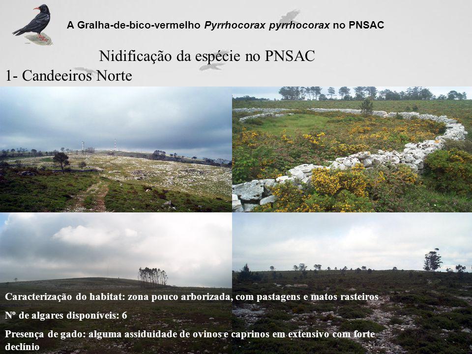 Nidificação da espécie no PNSAC 1- Candeeiros Norte A Gralha-de-bico-vermelho Pyrrhocorax pyrrhocorax no PNSAC Caracterização do habitat: zona pouco a